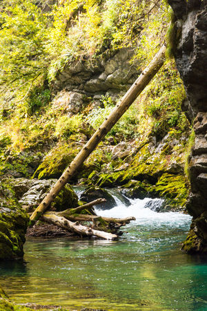 Vintgar Gorge Water Tree Forest Rock Rock - Object Solid Plant Nature No People Beauty In Nature Day Motion River Scenics - Nature Land Tranquility Outdoors Flowing Water Flowing