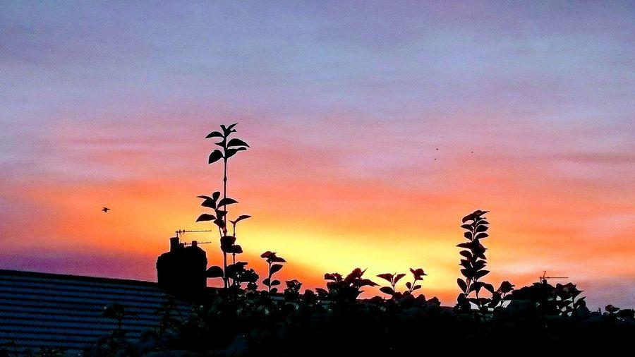 Sunset... Bird