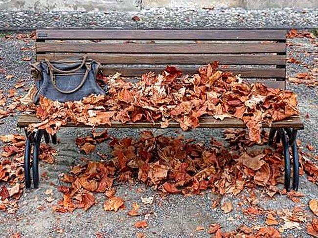 Wood - Material Leaf Day Autumn No People Change Outdoors Leaves Close-up