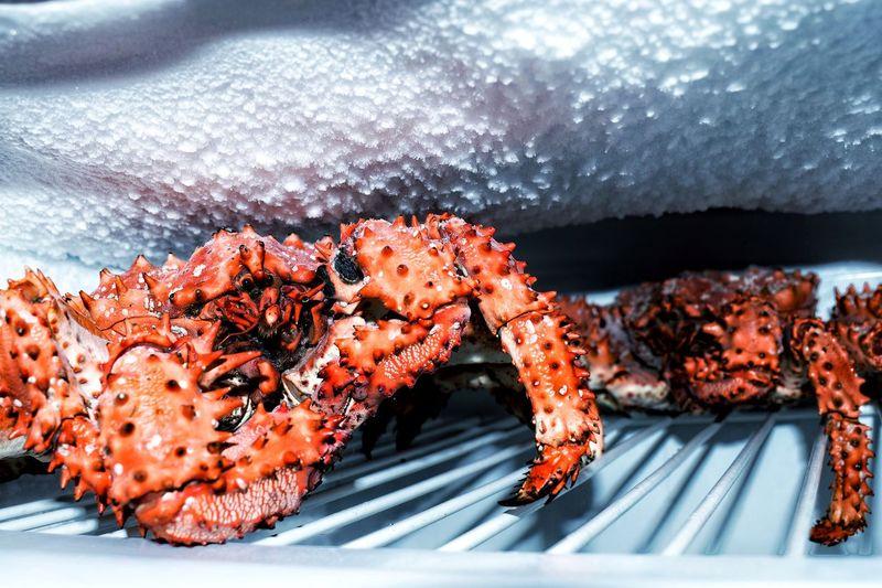 Close-up of crab in freezer