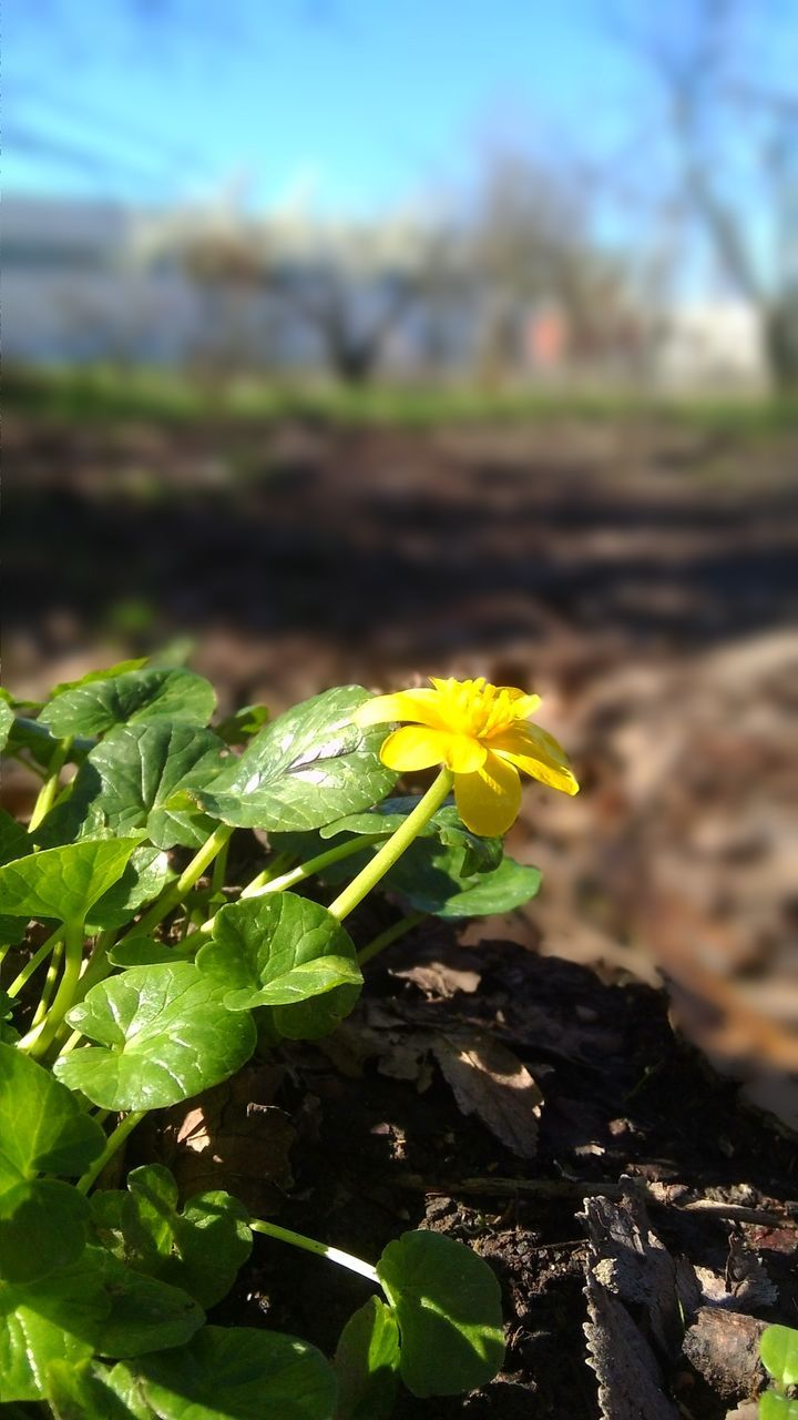 growth, nature, yellow, flower, green color, beauty in nature, plant, fragility, freshness, no people, outdoors, leaf, field, day, close-up, flower head