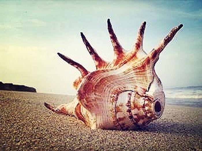 Terrestrial Gastropod Mollusc Love Summer 2013