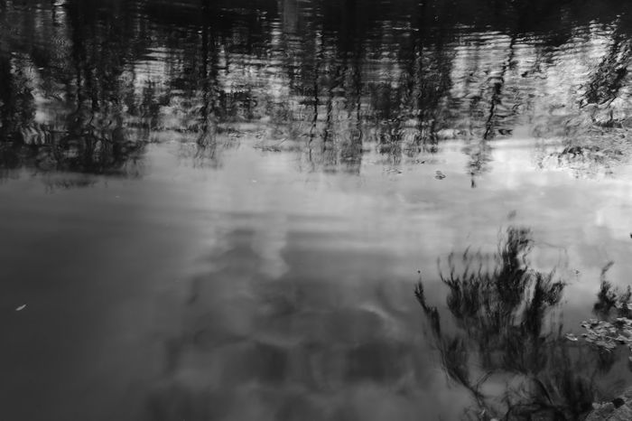 Ripples in the water Nygårdsparken Bergen Norway Park Reflection Nature Outdoors Autum Pond Blackandwhite Nofilter Noedit No People Canon Canonphoto Canonphotography Canoneos750d