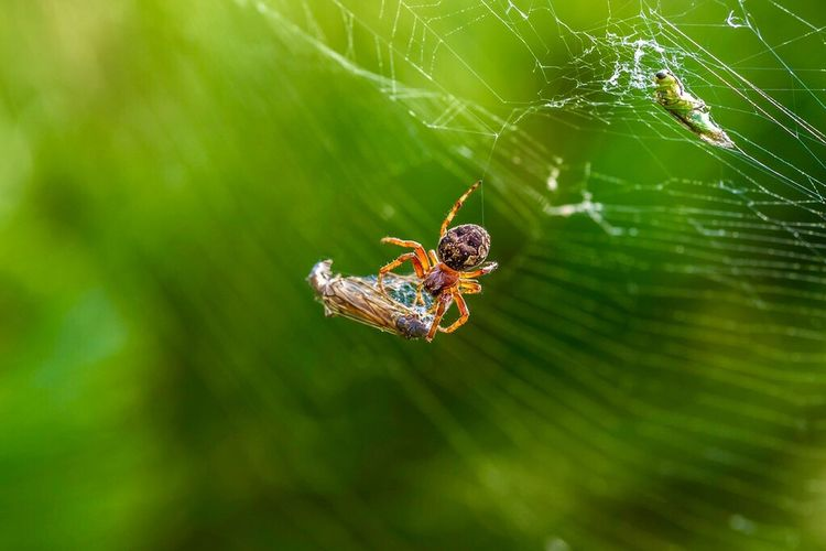 Spider Animals