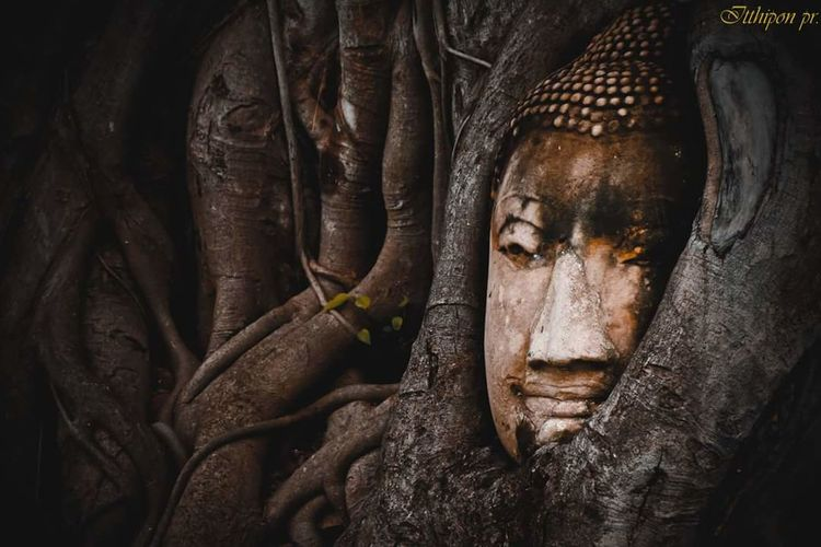 Believe in. Elephant Portrait Beauty Statue Place Of Worship Religion Spirituality Cultures Black Background Close-up