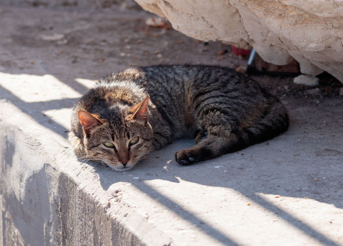 Cat lying on retaining wall outdoors