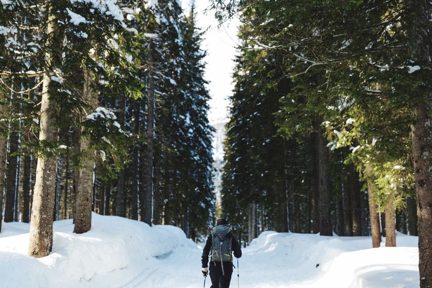 Travel discover and enjoy the amazing nature. Mountaineering Winter Landscape Winter Wonderland Winter Walking In The Woods Trekking Tree Trunk Day Scenics Landscape Forest Tranquility Outdoors Snowing No People Shades Of Winter