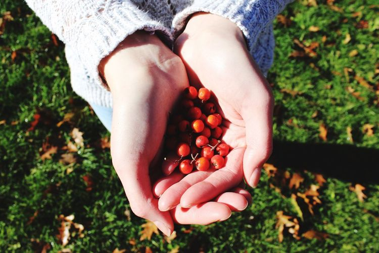 Cropped Image Of Woman Hand Holding Berries On Field