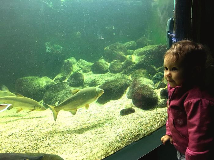 My Girl and the fishes Little Girl Child Water Childhood Sea One Person Real People Fish Underwater Transparent Glass - Material UnderSea Innocence Lifestyles EyeEmNewHere
