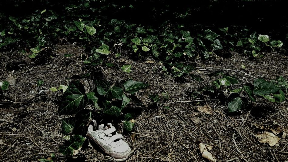 Every once in awhile you come across something Ominous and Disturbing Child's Shoe Lost ShoeWalking Around In The Suburbs Amongst The Ivy Ivy Ivy Leaves Before The Thick Of The Trees