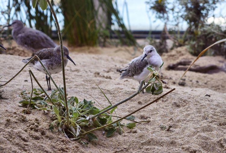 Monterey Bay Aquarium Birds EyeEm Nature Lover EyeEm Gallery EyeEm Birds Bird Photography Birdwatching Bird Birds_collection Birds Of EyeEm