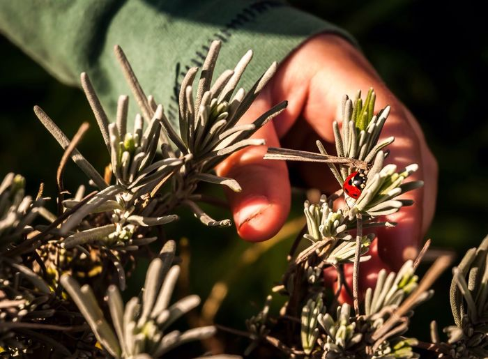 Person touching twig with ladybug