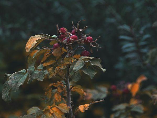 Bokeh Nikon Nikonphotography Grass Moscow Helios Helios 44m 7 58mm