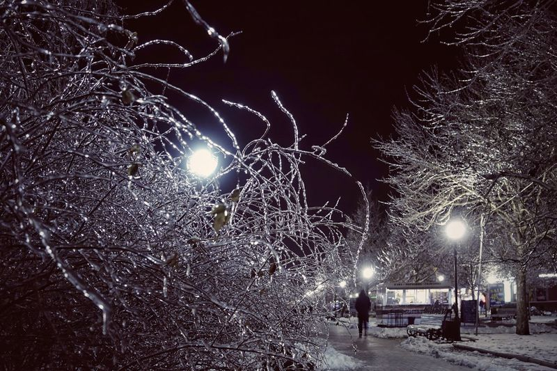 Plant Tree Branch Outdoors Cold Temperature Winter Bare Tree Snow Night Blackandwhite Black And White Black & White Ice Crystal Frozen Frost Cold Cold Days Monochrome Illuminated Street Street Light Lighting Equipment City Incidental People Building Exterior Snowing Light