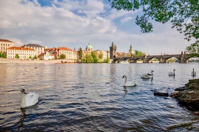 Birds in a river