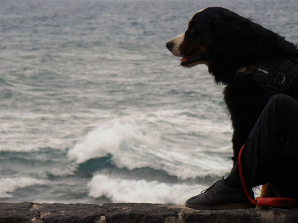 Animal Themes Dog And Sea El Médano El Médano, Tenerife Morning Exercises Nature And Animals One Animal Our Friends Sea Sea View The Dog And The Sea Walk The Dog Walks Along The Promenade