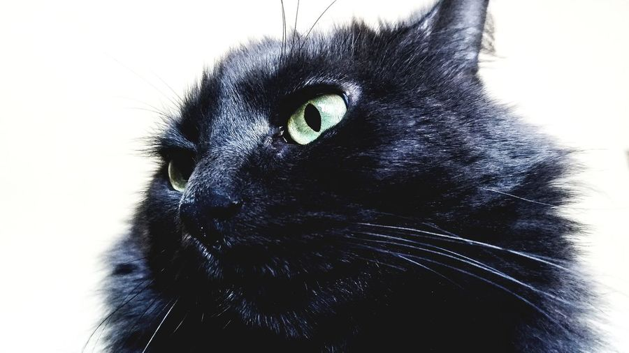 Close-up Low Angle View Pets Domestic Animals cat eye First Eyeem Photo