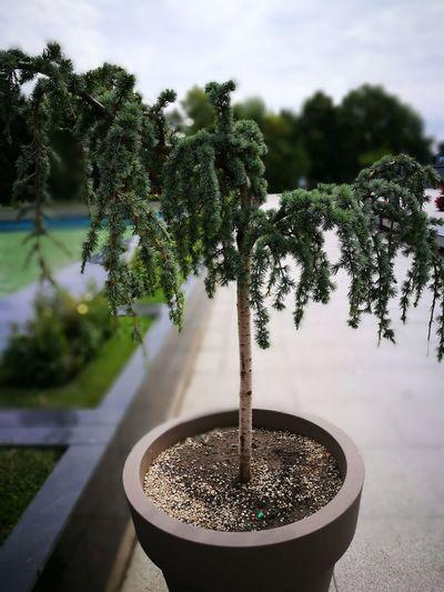 Hugging A Tree 🌲💜😅 First Eyeem Photo