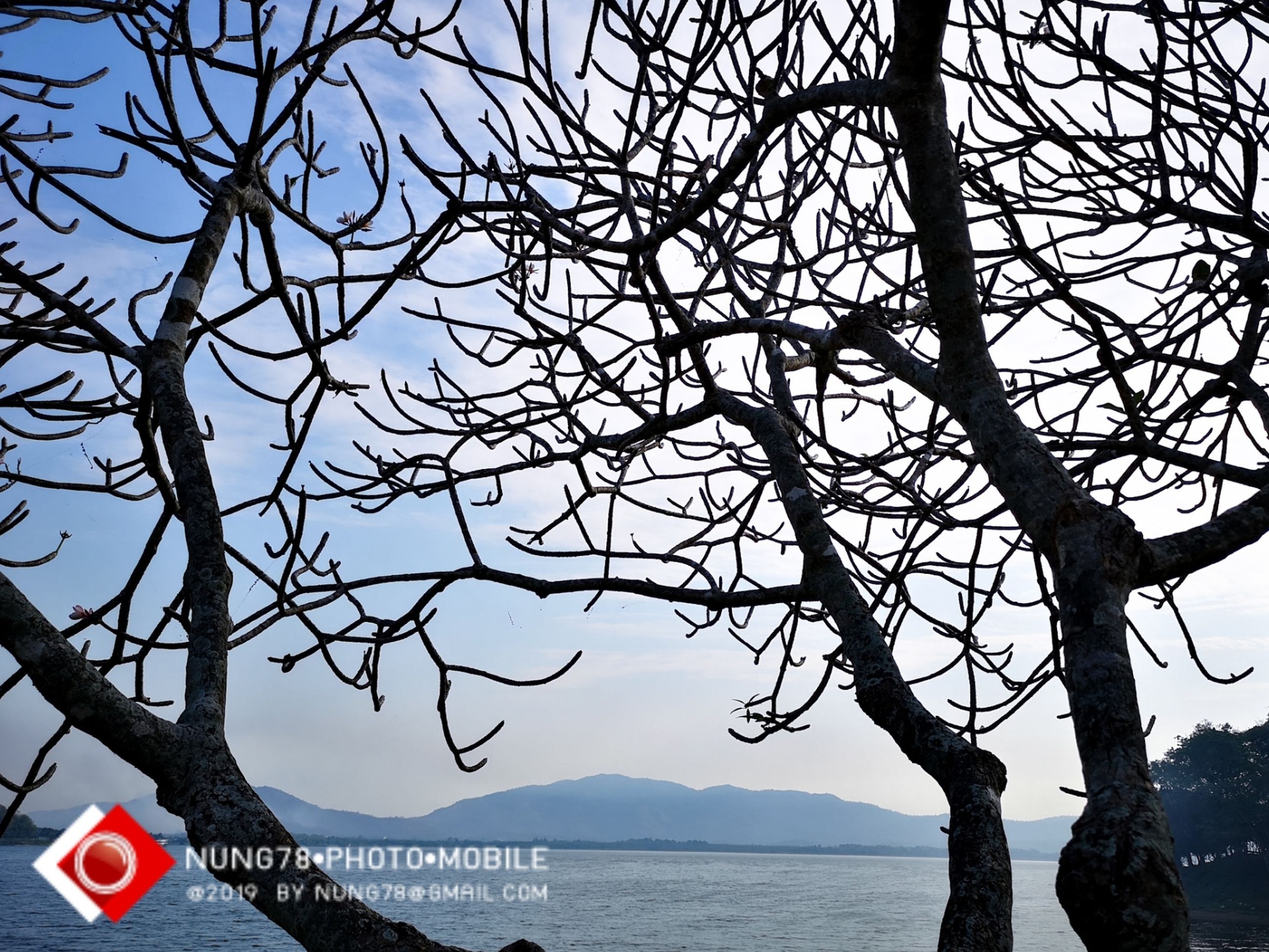 tree, branch, water, bare tree, sky, sea, nature, trunk, tree trunk, scenics - nature, tranquility, plant, beauty in nature, no people, text, tranquil scene, day, outdoors, clear sky, message