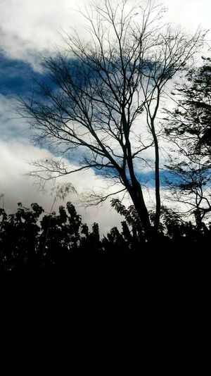 Sky Tree No