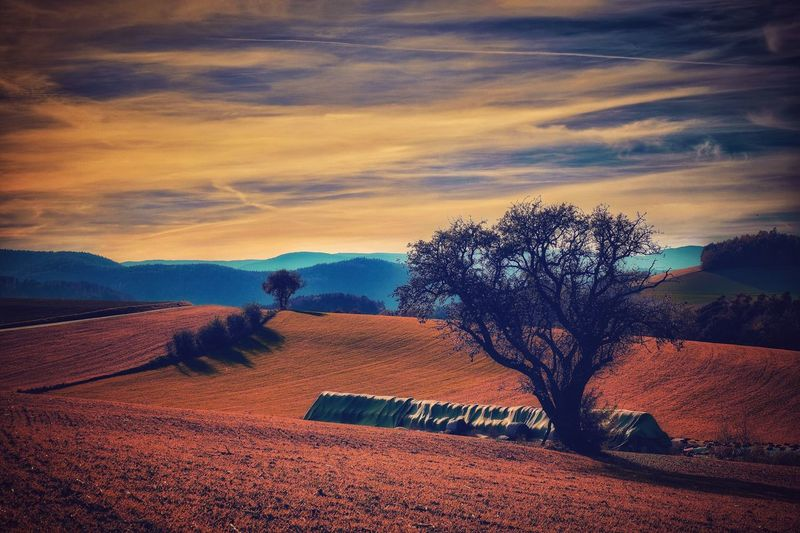 Daily Inspiration Tree Sky Nature Sunset Cloud - Sky No People Field Beauty In Nature Outdoors Tranquil Scene Tranquility Scenics Agriculture Landscape Mystical Atmosphere Daily Impressions Autumn Vienna Alps Idyllic Austria A Photo Like A Painting Melancholic Landscapes Capture The Moment Tranquility