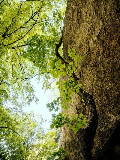 outbreak Getting Inspired Rocks Forest Plant Nature Full Frame Tree Day High Angle View Beauty In Nature Sunlight Outdoors Growth Green Color