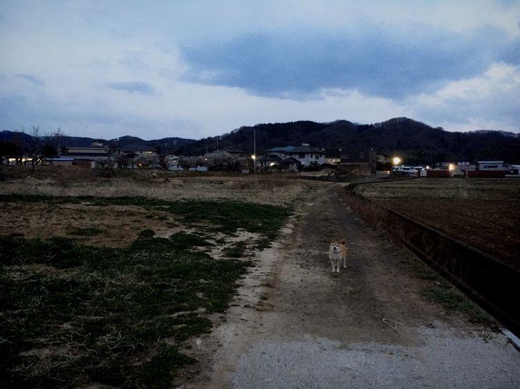 今にも降り出しそうな空だった。 夕方 さんぽ あんず しばいぬ Shibainu Anzu