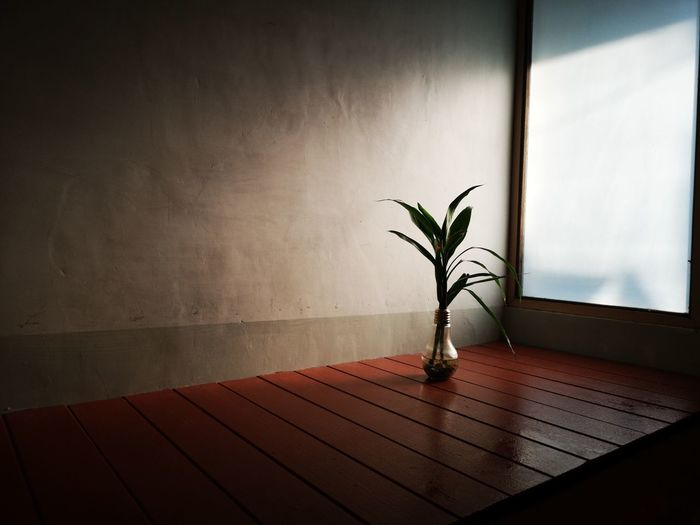Potted plant on table against window at home