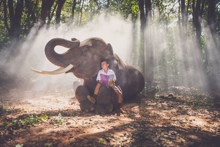 Boy studying while sitting on elephant in forest