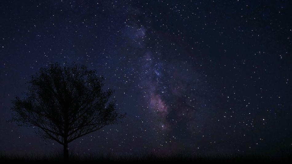 Starry Night Light Galaxy Stars Light And Shadow Taking Photos Outdoors Landscape Tree Milkyway Night Nightphotography Night Lights Night View Starry Sky Starry Night Blue Purple EyeEm Best Shots Eye4photography  Dark Lights