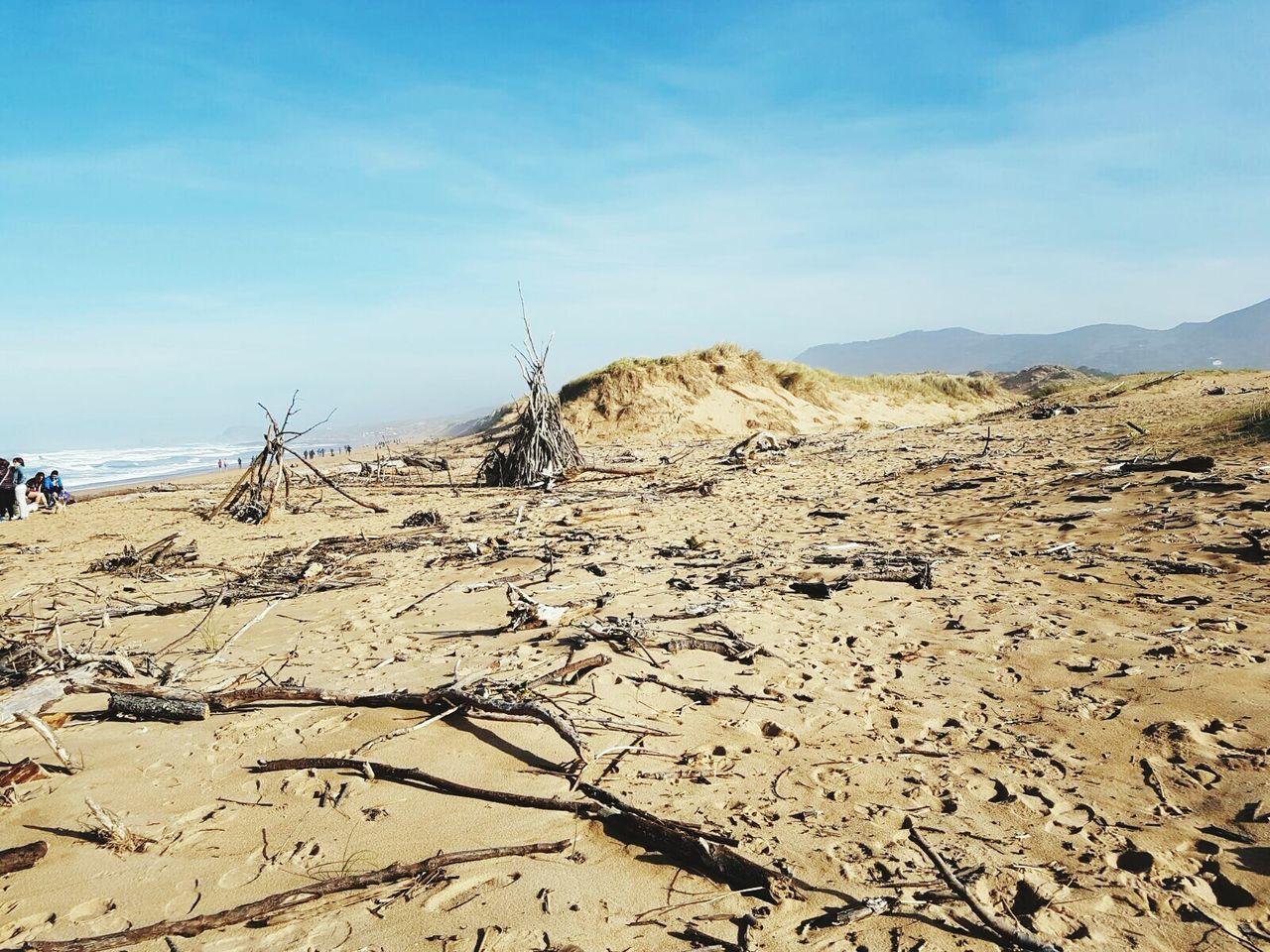 Sunny Day Landscape Arbol Caido Desierto Deserts Around The World Dry Land Dunas Arid Climate Sand Nature Outdoors Beach