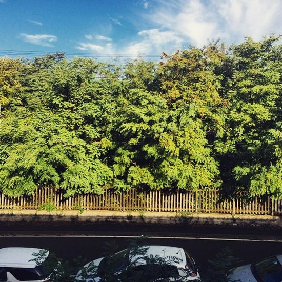 Nature School Time  ITIS Cardano Green Railway Station Beautiful Panorama Out Of The Window Nice Photo Cool Pic
