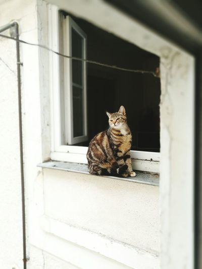 One Animal Domestic Cat Animal Themes Door Window Sill Window No People Day Mammal Sitting Feline Outdoors Built Structure Building Exterior Domestic Animals Pets Close-up Marielaureduarte
