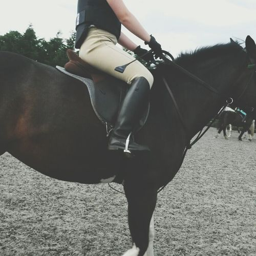 Me Horse Horse Riding Equestrian Life First Eyeem Photo