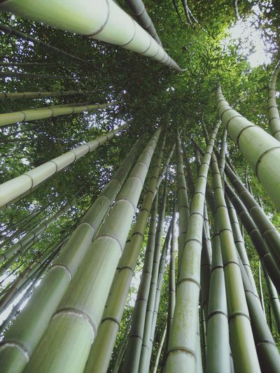 Ninfa Bamboo Forest Bamboo At The Park Vertical View Botanical Gardens Nature On Your DoorstepWanderlust Amazing Places Sunday Afternoon @Giardino di Ninfa (Italy)