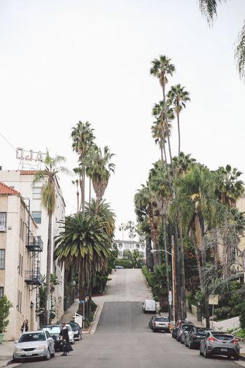 Architecture California City Hollywood Tourist Attraction  Palm Trees Street Tourist Destination California Dreamin