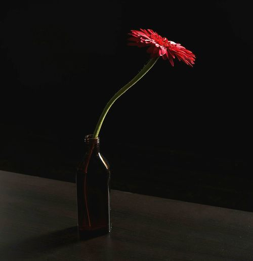 Close-up of flower vase against black background