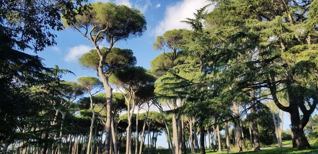 Tree Sky Green