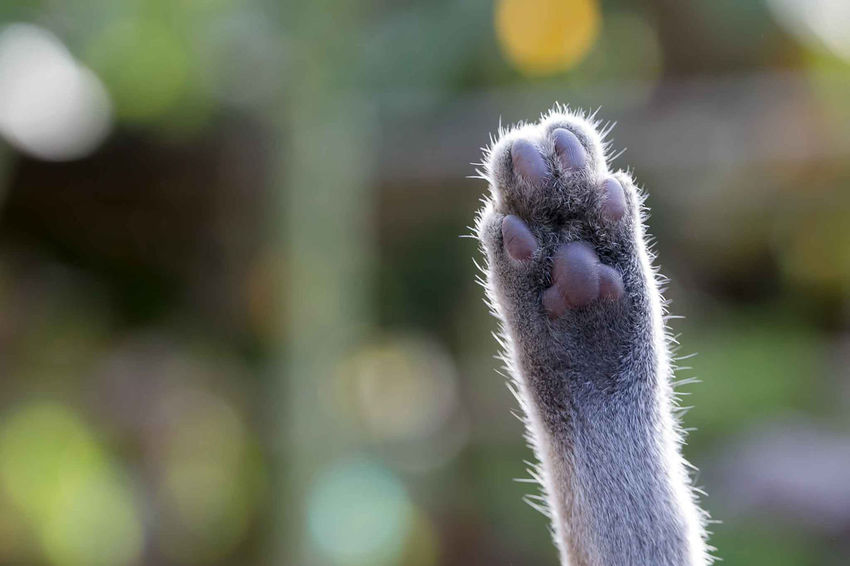 Cat Paw Macro Animal Animal Themes One Animal Vertebrate Animal Wildlife Focus On Foreground Animals In The Wild Close-up Animal Body Part No People Mammal Ostrich Day Animal Head  Nature Domestic Animals Outdoors Animal Neck Mouth Open Cygnet