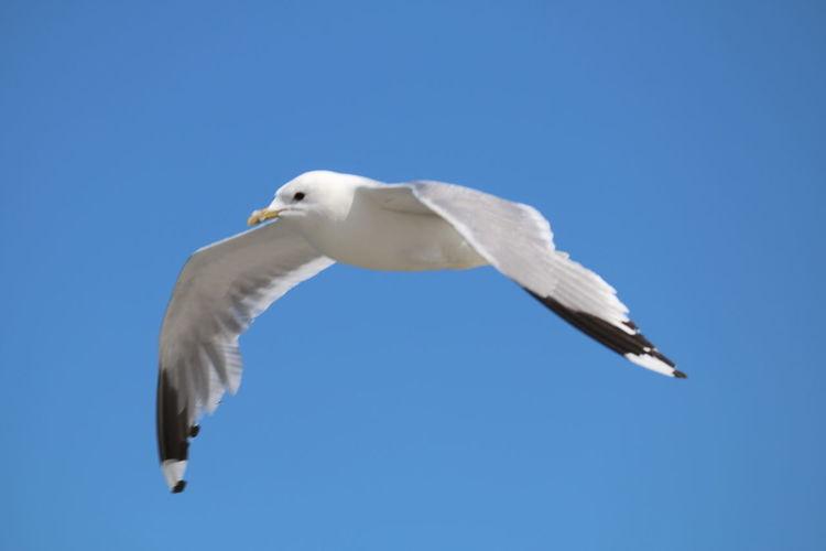 Möwe Möwe Auf Holzpfahl Möwe Im Flug Möwen Portrait Möwen Am See Möwen Im Wind. Vogel Vogel Im Flug Vogelfotografie