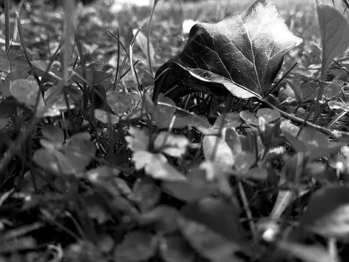 Nature No People Outdoors Close-up Beauty In Nature Freshness Grass Blackandwhite Blackandwhite Photography EyeEm Masterclass 😚 EyEmNewHere EyeEm Gallery EyeEm Best Shots The Great Outdoors - 2017 EyeEm Awards Eyem Nature Collection EyeEm Nature Lover EyeEm Nature Photography Eye4photography  Capture The Moment Eyem Best Edits Eyem Beauty In Nature Something Beautiful Eyem Collection