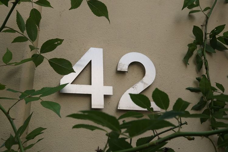 42  Climbing Plant Forty-two Fortytwo Hidden House Number Leaf Number Number 42 Plant The Answer To Life The Universe And Everything Wall