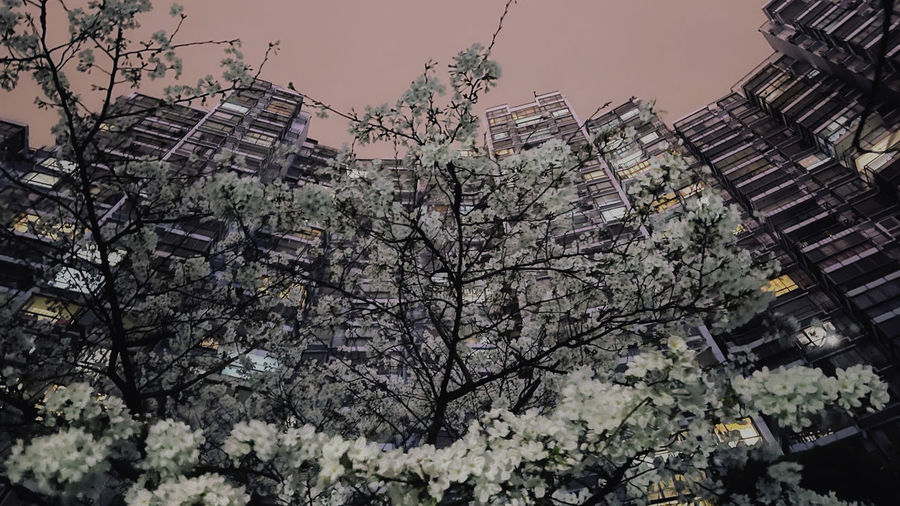 Low angle view of flowering tree against buildings in city