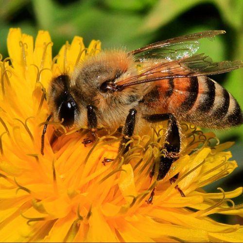 First Eyeem Photo Closeup Bee Beautiful