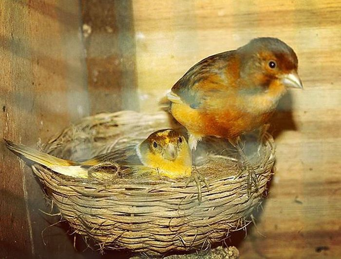 We'll take care of you baby. Breeding of birds. Birds Birdsphotography Breeding Birdsporn