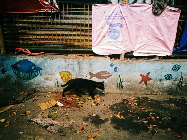 The Street Photographer - 2017 EyeEm Awards Street In Color Telling Stories Differently Your Design Story Street Photography Philippines Outdoors Eyeem Philippines Colour Your Horizn