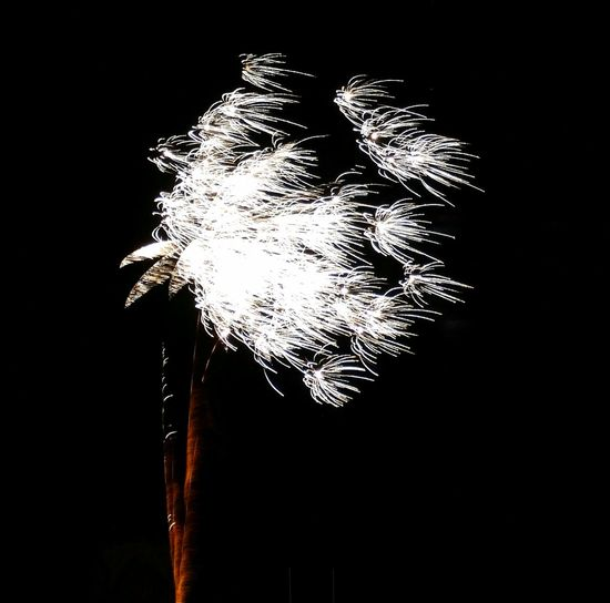Windy Dandelion Or Dodgy Firework Photo.