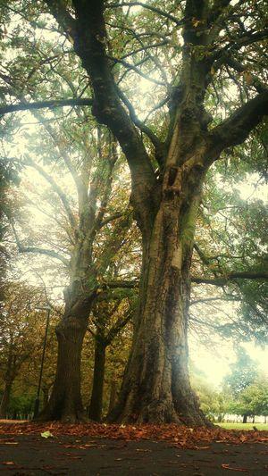 Park Tree Fall Leaf