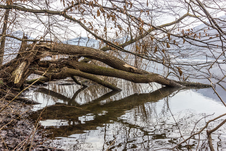 Reflection Bare