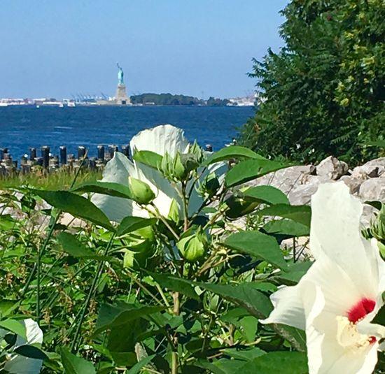 Sunshine on Liberty 08.12.16 Statue Of Liberty NYC